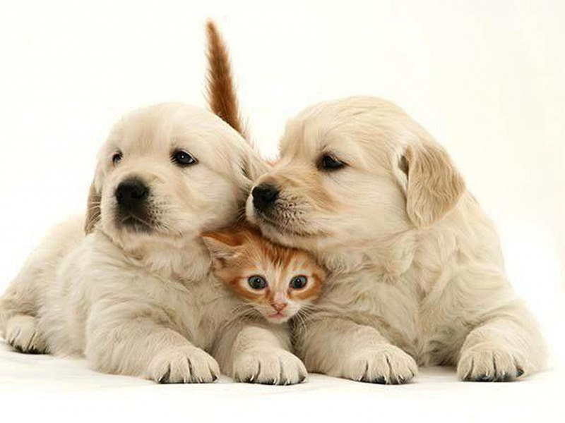 Pets and Essential Oils – Find Out Which Oils To Avoid