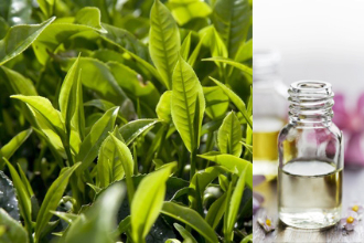 How Potent Are Essential Oils?